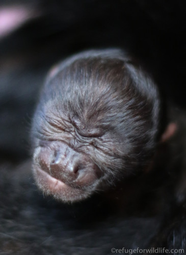 A close up of the newborn baby.