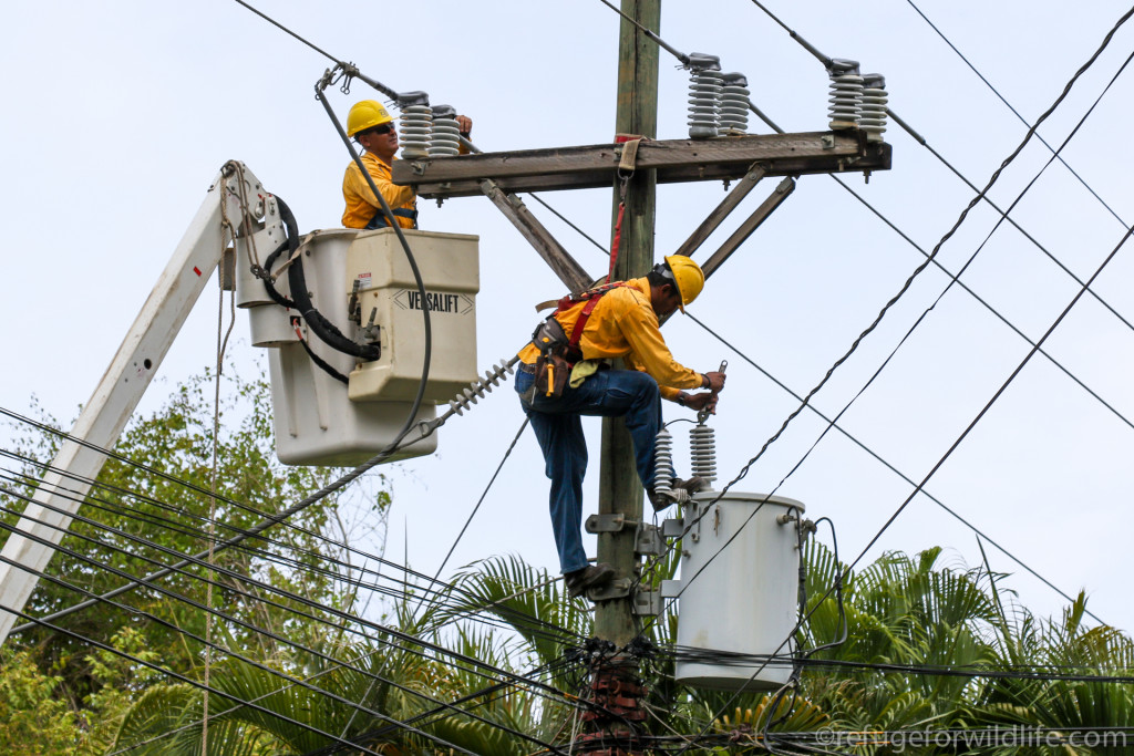 electrical workers installing wildlife protection equipment to prevent electrocutions