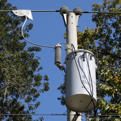 Stop the Shocks - Insulating Transformers and Power Lines - Refuge