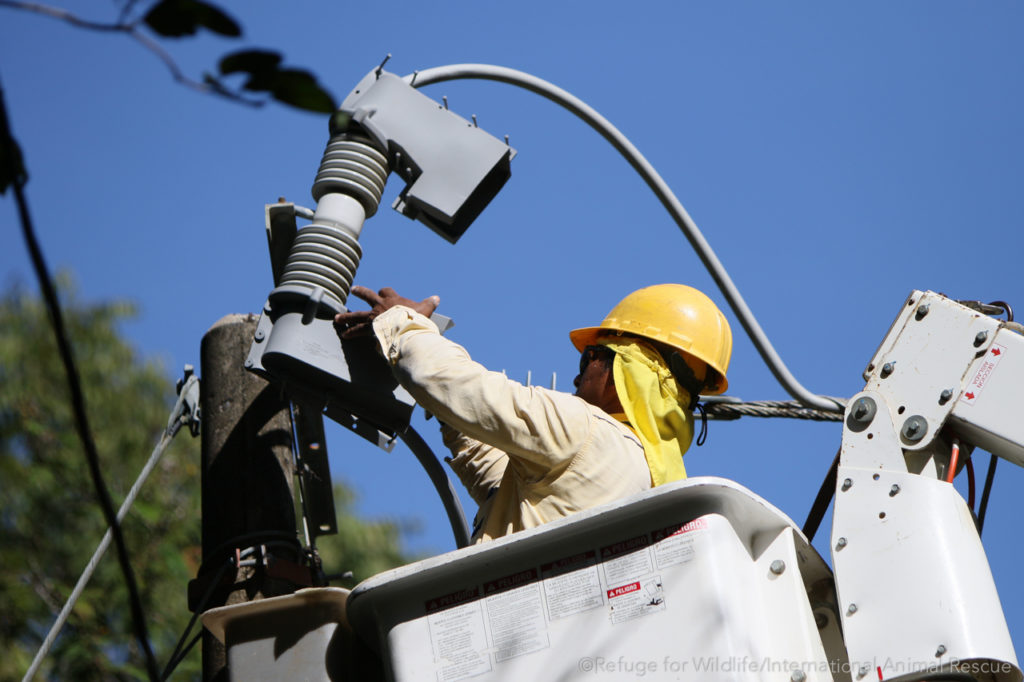 Electrical worker installing wildlife protection equipment on a power transformer